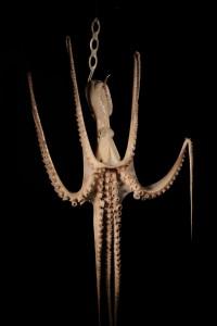 Photographie verticale couleur prise en studio.  C'est une vue frontale sur un poulpe dont les tentacules sont soulevées par des fils transparents. Sa tête est transpercée par un crochet métallique de boucher.